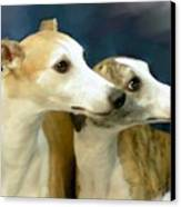 Whippet Watching Canvas Print by Maxine Bochnia