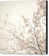 Whisper - Spring Blossoms - Central Park Canvas Print by Vivienne Gucwa