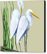 White Egrets And White Lillies Canvas Print by Kevin Brant