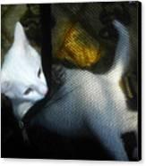 White Kitten Canvas Print by David Lee Thompson