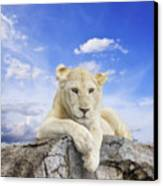 White Lion Canvas Print by Anek Suwannaphoom