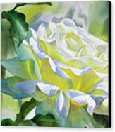 White Rose With Yellow Glow Canvas Print by Sharon Freeman