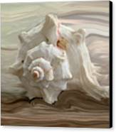 White Shell Canvas Print by Linda Sannuti