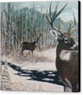 Whitetail Deer Canvas Print by Ben Kiger