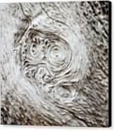 Whorly Wood Canvas Print by Lynda Dawson-Youngclaus
