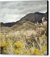 Wildflower Mountain Canvas Print by Andrea Hazel Ihlefeld