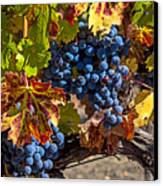 Wine Grapes Napa Valley Canvas Print by Garry Gay