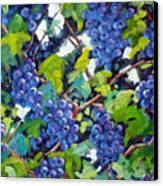 Wine On The Vine Canvas Print by Richard T Pranke