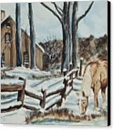 Winter Grazing  Canvas Print by Charlotte Blanchard