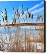Winter In The Salt Marsh Canvas Print by Catherine Reusch  Daley