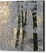 Winter Sun Canvas Print by Odd Jeppesen