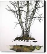 Winters Birch Canvas Print by Carolyn Doe