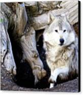 Wolf Den 1 Canvas Print by Marty Koch