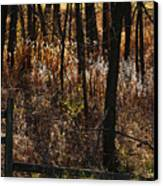 Woods - 2 Canvas Print by Linda Shafer