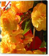 Yellow Begonia Flowers.  Victoria Canvas Print by Darlyne A. Murawski