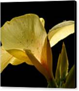 Yellow Canna Canvas Print by Jeannie Burleson