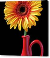 Yellow Fancy Daisy In Red Vase Canvas Print by Garry Gay
