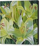 Yellow Lilies With Buds Canvas Print by Sharon Freeman