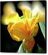 Yellow With Red Spots Canvas Print by Douglas Barnard