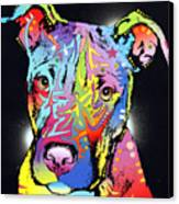 Young Bull Pitbull Canvas Print by Dean Russo