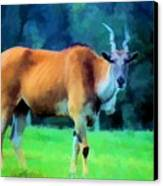 Young Eland Bull Canvas Print by Jan Amiss Photography