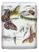 Australian Butterflies Duvet Cover by Philip Ralley