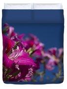 Bauhinia Purpurea - Hawaiian Orchid Tree Duvet Cover by Sharon Mau