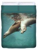 California Sea Lions Playing Sea Duvet Cover by Tui De Roy