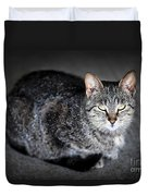 Grey Cat Portrait Duvet Cover by Elena Elisseeva