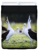 Laysan Albatross Courtship Dance Hawaii Duvet Cover by Tui De Roy