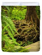 Path in temperate rainforest Duvet Cover by Elena Elisseeva