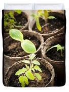 Seedlings Growing In Peat Moss Pots Duvet Cover by Elena Elisseeva
