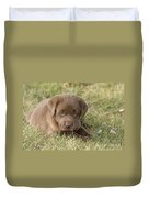 Chocolate Labrador Puppy Duvet Cover by Linda Freshwaters Arndt