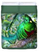Beautiful Quetzal 4 Duvet Cover by Heiko Koehrer-Wagner