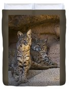 Bobcat 8 Duvet Cover by Arterra Picture Library