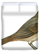 Brown towhee Duvet Cover by Anonymous