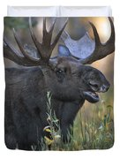 Bull Moose Calling Duvet Cover by Gary Langley