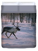 Bull Reindeer In  Siberia Duvet Cover by Bryan and Cherry Alexander