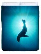 California Sea Lion  Channel Islands Np Duvet Cover by Flip Nicklin