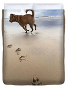Canine Beach Jogging Duvet Cover by Eldad Carin