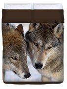 Captive Close Up Wolves Interacting Duvet Cover by Steven Kazlowski