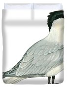 Caspian tern Duvet Cover by Anonymous