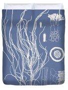 Cladosiphon flagelliformis Duvet Cover by Aged Pixel