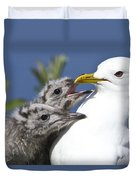 Close Up Of A Mew Gull With Two Hungry Duvet Cover by Ken Baehr
