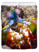 Close-up View Of A Mantis Shrimp Duvet Cover by Steve Jones