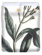 Clove Eugenia Aromatica Duvet Cover by Anonymous