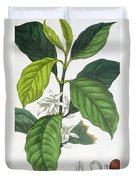 Coffea Arabica Duvet Cover by Pancrace Bessa