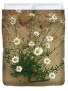 Daisies In The Sand Duvet Cover by Randy Pollard