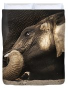 Elephant - lying down Duvet Cover by Johan Swanepoel