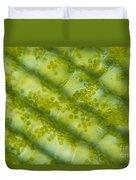 Elodea Algae Duvet Cover by James M. Bell